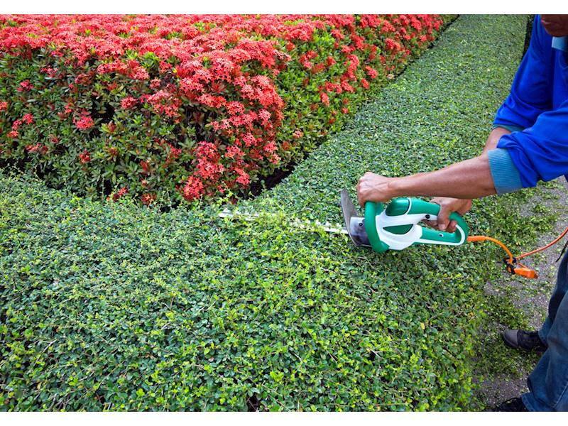 Highly Successful Growing Landscaping And Maintenance Business