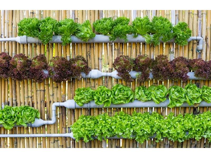 Vertical Gardens And Hydroponic Supplies For Sale In